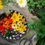 15 Edible Flowers You Might Want To Have in Your Garden